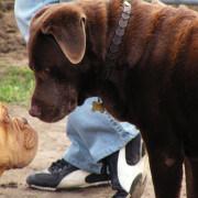 Flickr_Eddy Van 3000_What's up dog