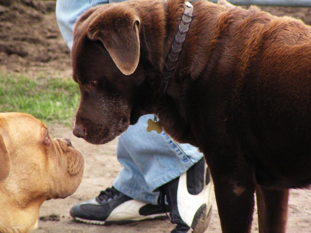 Was Ist Ein Underdog